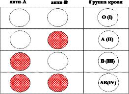 Определение группы крови по системе AB0 с помощью моноклональных антител