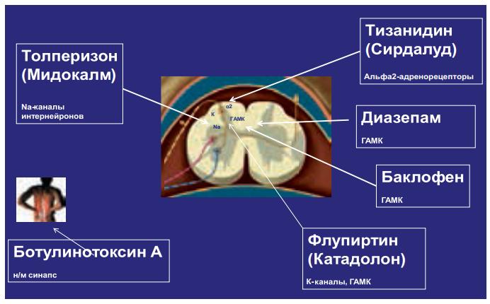 Препараты, уменьшающие мышечный спазм