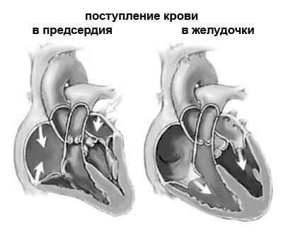 Гемодинамика в сердце