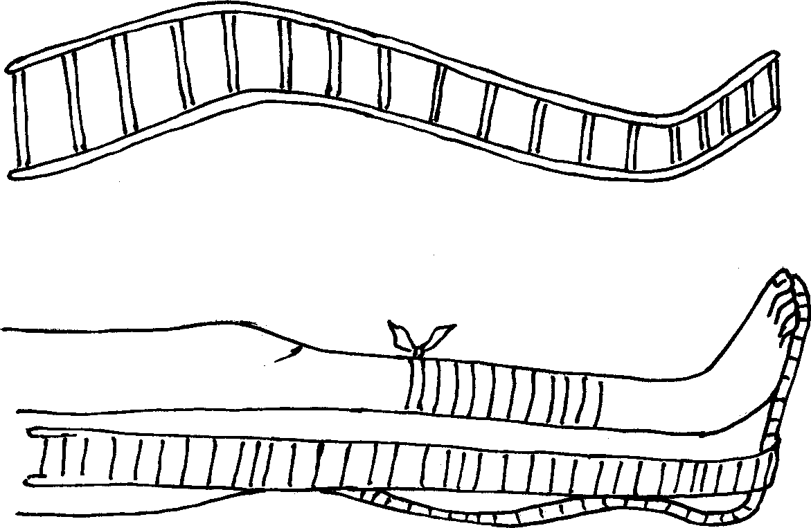 Наложение лестничной шины при вывихах в коленном и голеностопном суставах