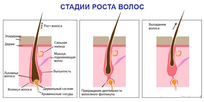 рост и выпадение волос