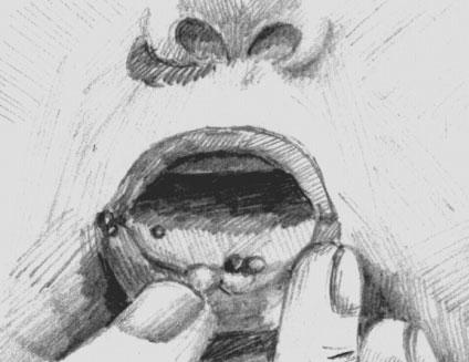 Афтозные высыпания на слизистой рта при ящуре