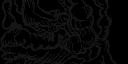 Варикоз вен семенного канатика